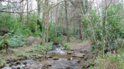 Save South Dublin Forests